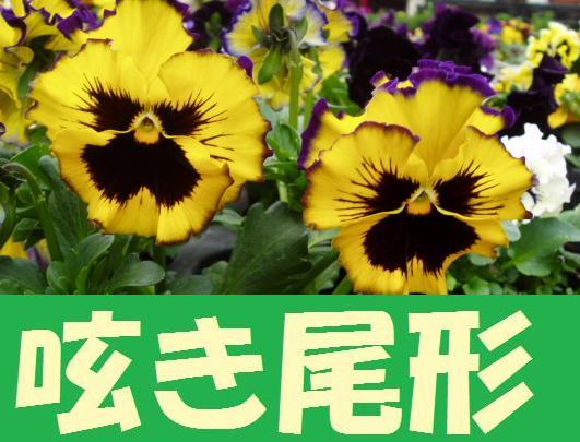 ガンダム0092 ガンダム雑学 サイトコンテンツ紹介