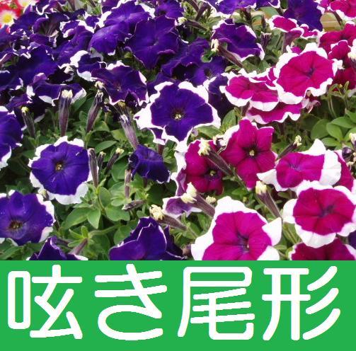 花紀行 記事一覧 2015年5月7日